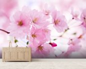 Japanese Cherry Tree in Blossom mural wallpaper living room preview