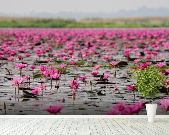 Sea of Pink Lotus, Thailand mural wallpaper room setting