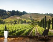 California Vineyards mural wallpaper kitchen preview