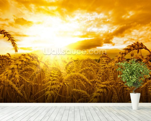 Sunset Over Wheat Field mural wallpaper room setting