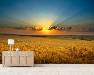 Golden field wall mural