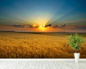 Golden field wall mural in-room view