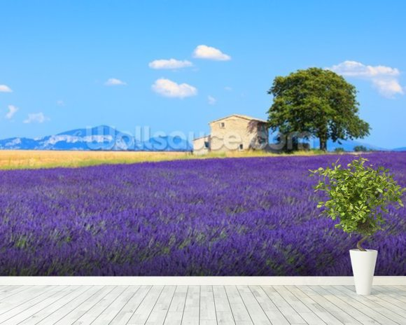 Provence - Lavender Flowers wall mural room setting