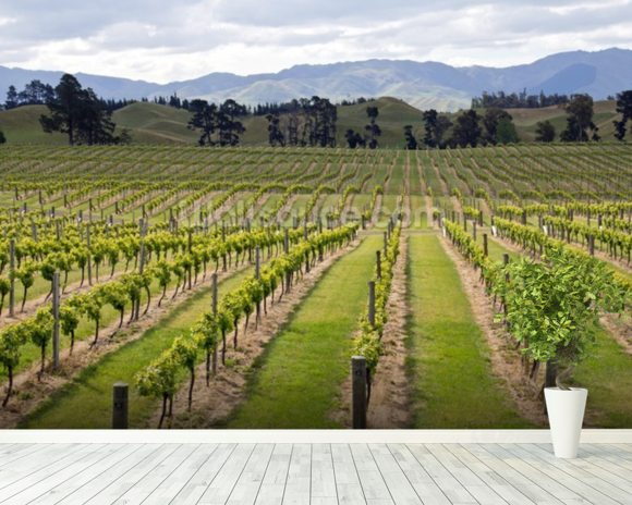 Marlborough Vineyards wall mural room setting