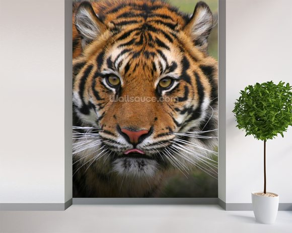 Tiger Close Up wallpaper mural room setting