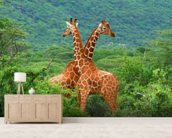 Giraffe Fight mural wallpaper living room preview