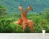 Giraffe Fight mural wallpaper in-room view