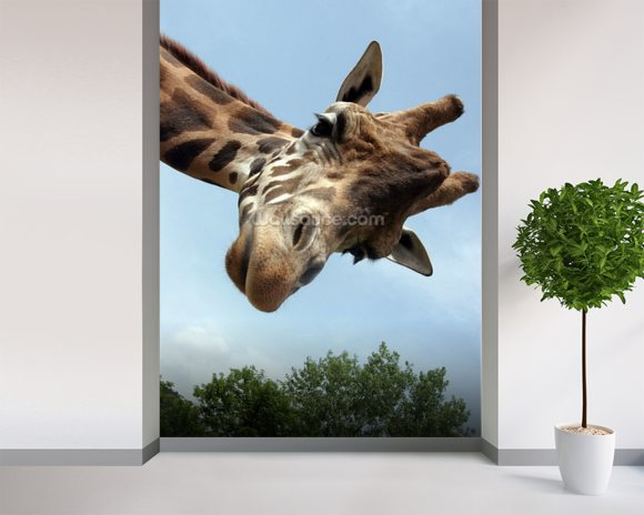 Giraffe mural wallpaper room setting