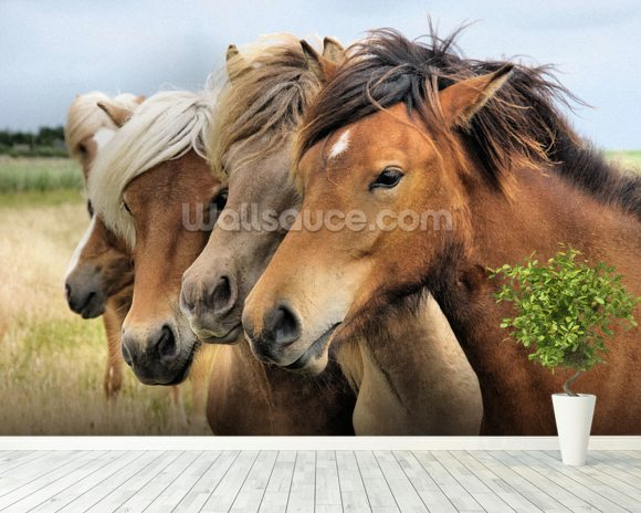Icelandic Horses wallpaper mural room setting