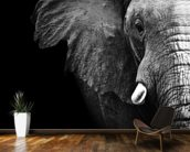 Elephant Close Up wall mural kitchen preview