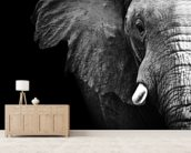 Elephant Close Up wall mural living room preview