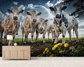 Mooooooo mural wallpaper living room preview