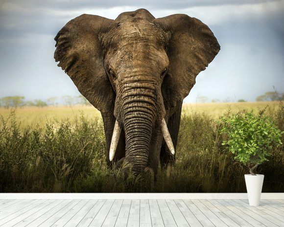Elephant wall mural elephant wallpaper wallsauce usa for Elephant wall mural