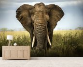 Elephant wallpaper mural living room preview