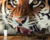 Siberian Tiger Growling wallpaper mural kitchen preview