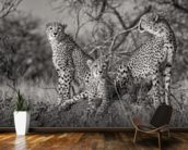 Three Cats mural wallpaper kitchen preview