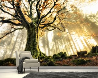 Tree Giant Wall Mural Wallpaper