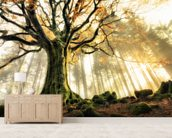 Tree Giant wallpaper mural living room preview