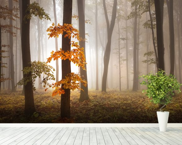 Misty autumn forest wall mural misty autumn forest for Autumn forest wall mural