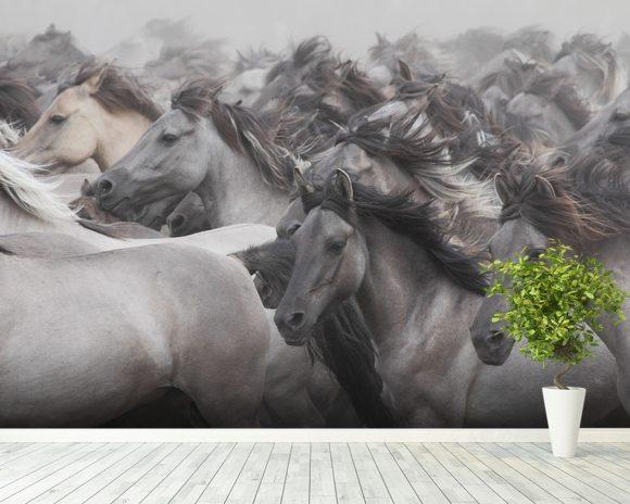 Wild Horses Wall Mural & Wild Horses Wallpaper