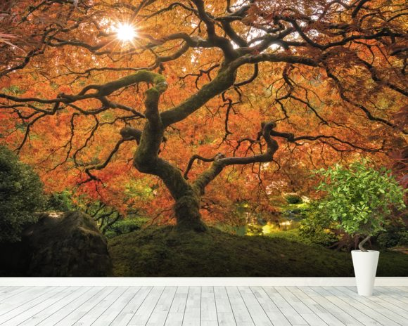 autumn trees wall mural autumn trees wallpaper
