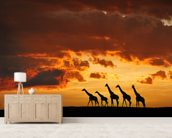 5 Giraffes mural wallpaper living room preview