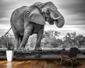 Elephant Black and White wall mural kitchen preview