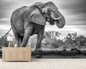 Elephant Black and White wall mural living room preview