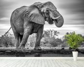 Elephant Black and White wall mural in-room view