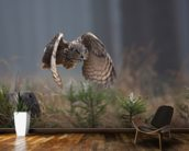Eurasian Eagle Owl mural wallpaper kitchen preview