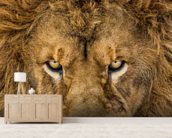 Serious Lion wall mural living room preview
