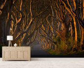 Tree Avenue mural wallpaper living room preview
