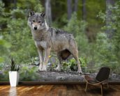 Wolf in the Woods wallpaper mural kitchen preview