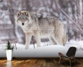 Timber Wolf mural wallpaper kitchen preview