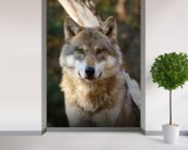 Grey Wolf wall mural in-room view