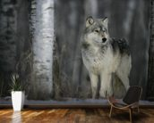Grey Wolf Prowls mural wallpaper kitchen preview