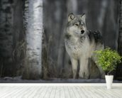 Grey Wolf Prowls mural wallpaper in-room view