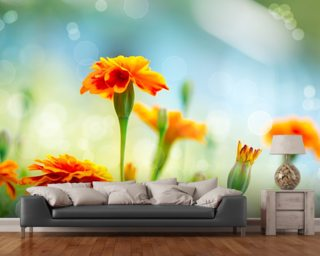 Tagetes Marigold Flowers Mural Wallpaper Wall Murals Wallpaper