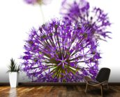 Beautiful Allium Flowers wall mural kitchen preview