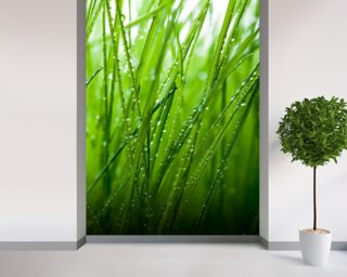 Green Wall Murals Wallpaper