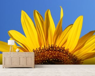 Sunflower Sunrise mural wallpaper