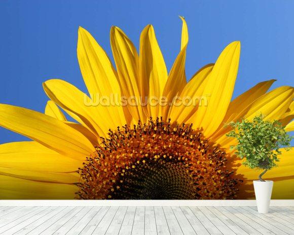 sunflower sunrise wallpaper wall mural wallsauce