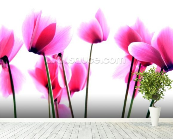Cyclamen wall mural room setting