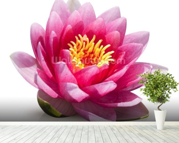 Lotus Flower Solitude wallpaper mural room setting