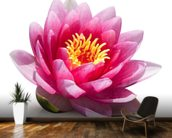 Lotus Flower Solitude wallpaper mural kitchen preview
