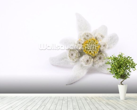 Edelweiss wallpaper mural room setting