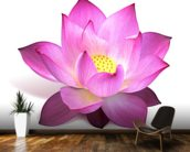Lotus Flower mural wallpaper kitchen preview