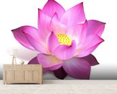 Lotus Flower mural wallpaper living room preview
