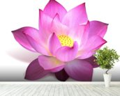 Lotus Flower mural wallpaper in-room view