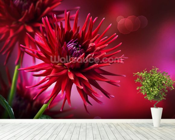 Dahlia Autumn wall mural room setting